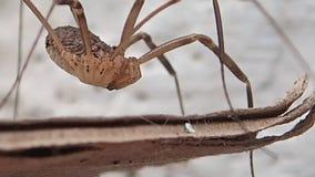 Длинный двигать паукообразные ног акции видеоматериалы