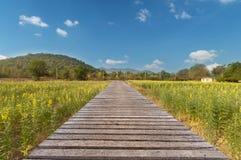 Длинный деревянный мост и красивый солнечный свет и цветок, селективный fo Стоковое Фото