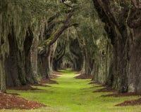Длинный путь через дубы к неизвестному назначению стоковые фото