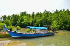 Длинн-замкнутая шлюпка на лесе мангровы Стоковое Фото