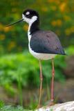 Длинн-шагающая птица стоковое фото rf