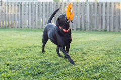 Для влюбленности Frisbee Стоковое Изображение RF