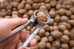 Для треская инструмента грецких орехов Стоковые Изображения RF