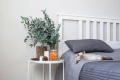 Евкалипт в интерьере, в спальне кроватью Стоковая Фотография RF