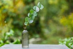 Евкалипт в стеклянной вазе Стоковая Фотография RF