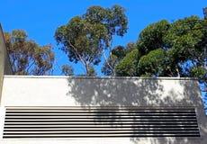 Евкалипт на UCSD Стоковые Фотографии RF