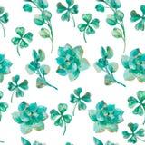 Евкалипт вектора акварели выходит и ветви, succulent, клевер Покрашенная рукой картина акварели shamrock Стоковое Изображение RF