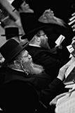 Евреи моля Стоковое фото RF