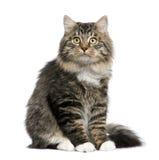 евроец кота Стоковая Фотография RF
