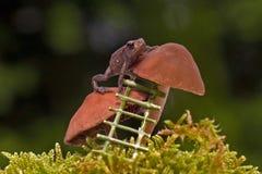 Европейская жаба, bufo Bufo младенец 15 mm на губке Стоковое фото RF
