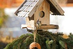 Европейская Crested птица синицы есть семена пеньки на деревянной птице f Стоковое Изображение