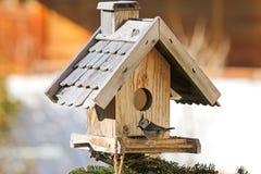 Европейская Crested птица синицы на деревянном фидере птицы с se пеньки Стоковые Изображения RF