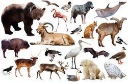 Европейские изолированные животные Стоковая Фотография RF