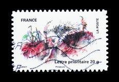 Европейский еж (europaeus) ежа, serie животных, около 20 Стоковые Изображения