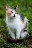 Европейский кот Стоковое Изображение