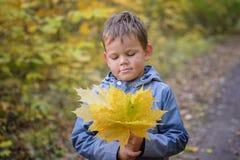 Европейский мальчик в парке осени с желтой листвой стоковые фотографии rf