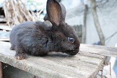 Европейский милый кролик зайчика на стороне страны Стоковое Фото