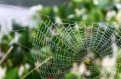 Европейский паук Стоковое Изображение