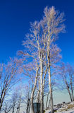 Европейское дерево бука в зиме стоковое изображение rf