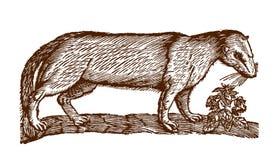 Европейское putorius mustela polecat рядом с заводом иллюстрация вектора