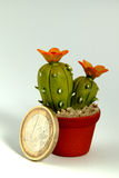 евро кактуса Стоковое фото RF
