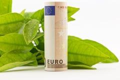 Евро с зелеными листьями Стоковая Фотография
