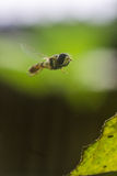 девушка летания costume пчелы малая Стоковое Изображение