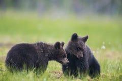 девушка новичков мальчика медведя воздушного шара дает 2 Стоковое Фото