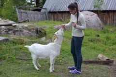 девушка подавая коза Стоковые Фотографии RF