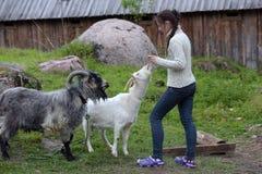 девушка подавая коза Стоковые Изображения RF