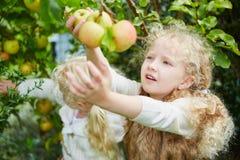 2 девушки выбирая вверх яблока Стоковая Фотография