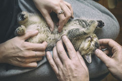 2 девушки заштриховали котенка лежа на ее коленях Стоковые Изображения