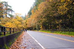 2 девушки на дороге с деревьями осени пожелтели Стоковое фото RF