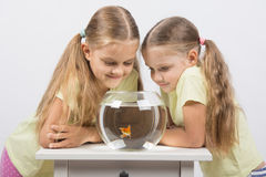 2 девушки смотря вниз на рыбке в аквариуме Стоковые Изображения