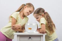2 девушки смотря рыбку Стоковые Фото