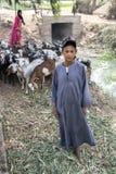 Египетские мальчик и женщина пасут их табуна коз на Саккаре в Египте Стоковое фото RF