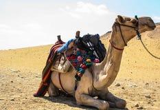 Египет и Каир в лете Стоковое Фото
