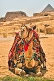 Египет, Каир; 19-ое августа 2014 - египетские пирамиды в Каире Стоковое Фото