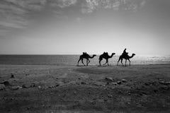 Египет Стоковые Фотографии RF
