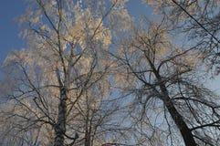 легко редактируйте изображение к зиме вектора валов Стоковое Изображение RF