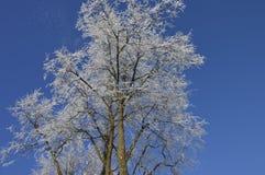 легко редактируйте изображение к зиме вектора валов Стоковое Фото