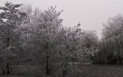 легко редактируйте изображение к зиме вектора валов Стоковая Фотография