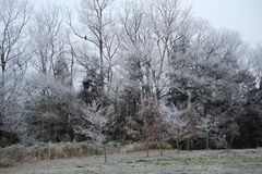 легко редактируйте изображение к зиме вектора валов Стоковые Фотографии RF