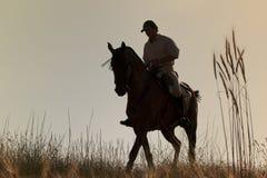его заход солнца всадника лошади Стоковые Изображения RF