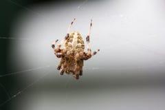 его сеть паука Стоковые Фотографии RF
