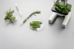 Еда безопасности Лаборатория для анализа еды Травы, зеленые цвета под микроскопом на сером космосе экземпляра взгляд сверху предп стоковое фото rf