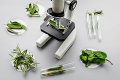 Еда безопасности Лаборатория для анализа еды Травы, зеленые цвета под микроскопом на сером взгляд сверху предпосылки стоковые изображения