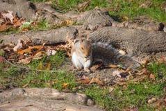 еда белки арахиса Стоковые Фото