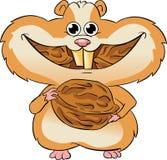 еда грецких орехов хомяка Стоковые Фотографии RF