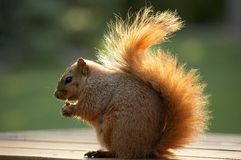 еда грецкого ореха белки Стоковая Фотография
